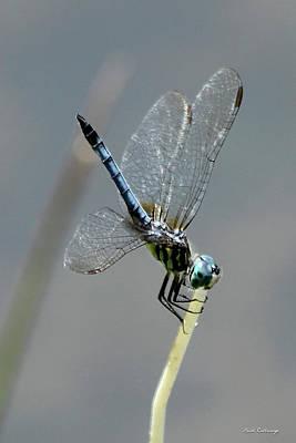 Photograph - Standing Tall Dragonfly Farm Pond Art by Reid Callaway