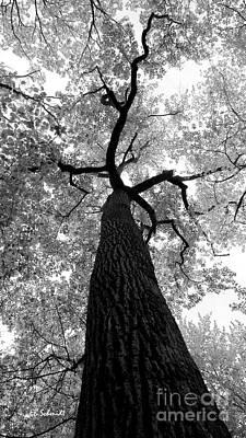 Photograph - Standing Tall by E B Schmidt