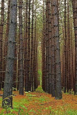 Photograph - Standing Tall - Hills Creek State Park by Joel E Blyler