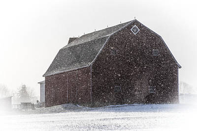 Photograph - Standing Tall In The Snow by Joann Long