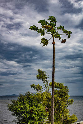 Photograph - Standing Tall In The Wind by Martin Naugher
