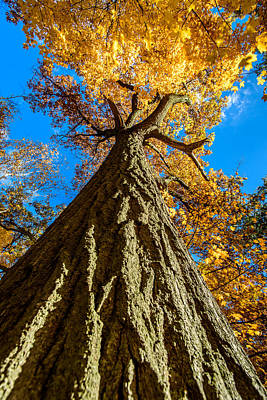 Photograph - Standing Tall by Randy Scherkenbach
