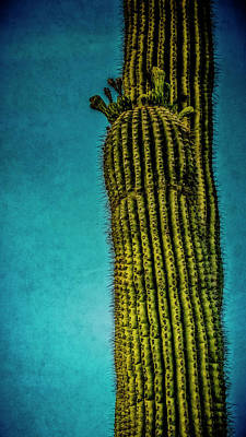 Photograph - Standing Tall by Sandra Selle Rodriguez