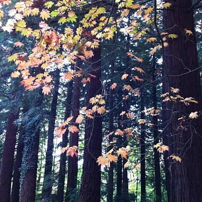 Autumn Photograph - Standing Tall by Susan Fernandez