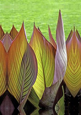 Standing Tall Tropicanna Leaves  Art Print by Joe Darin