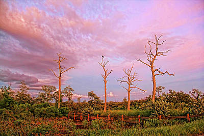 Photograph - Standing Watch by HH Photography of Florida