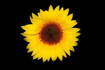 Photograph - Standout Sunflower by Karen Silvestri