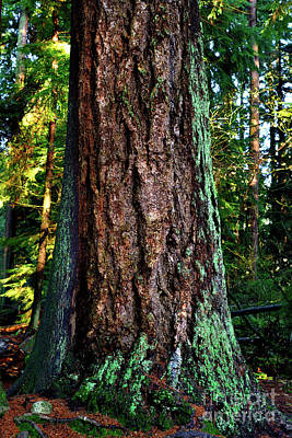 Photograph - Stanley Park Tree  by Terry Elniski