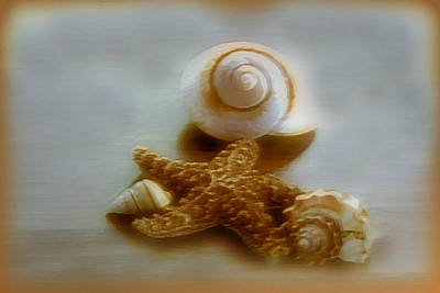 Star And Shells Art Print by Linda Sannuti
