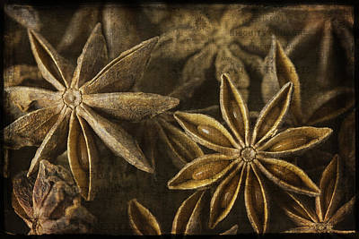 Photograph - Star Anise by Cindi Ressler