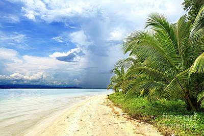 Photograph - Star Beach At Bocas Del Toro by John Rizzuto