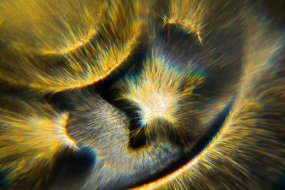 Photograph - Star Burst by Greg Collins