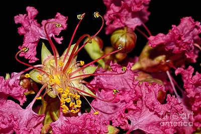 Photograph - Star Burst Stamen By Kaye Menner by Kaye Menner