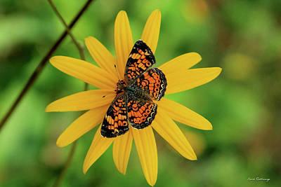 Photograph - Star Butterfly Art by Reid Callaway