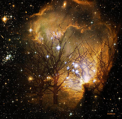 Photograph - Star Clusters Through The Trees by Ericamaxine Price