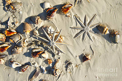 Photograph - Star Fish And Sea Shells by David Arment