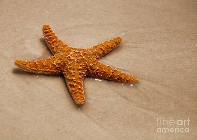 Photograph - Star Fish by Susan Cliett