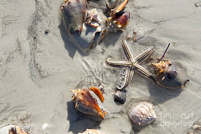 Photograph - Star Fish With Five Points On Beach 2 by David Arment