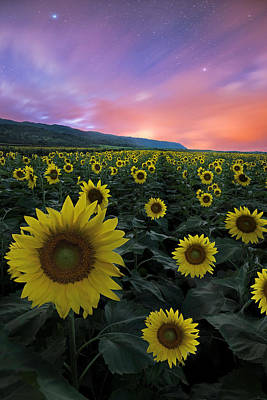 Photograph - Star Flowers by James Roemmling