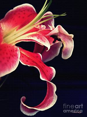 Photograph - Star Gazer Lily by Sarah Loft