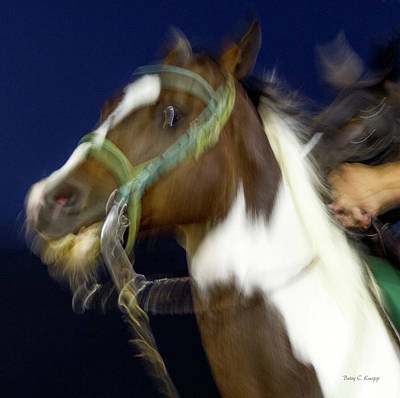 Gelding Photograph - Star Gazing by Betsy Knapp