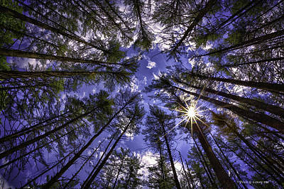 Photograph - Star Light by Denis Lemay