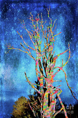Photograph - Star Light Rainbow Tree In The Blue Ridge Fx by Dan Carmichael