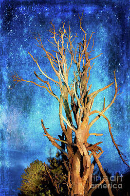 Painting - Star Light Tree In The Blue Ridge Ap by Dan Carmichael