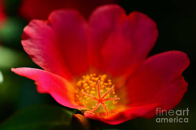 Photograph - Star Of The Show by Kelly Nowak