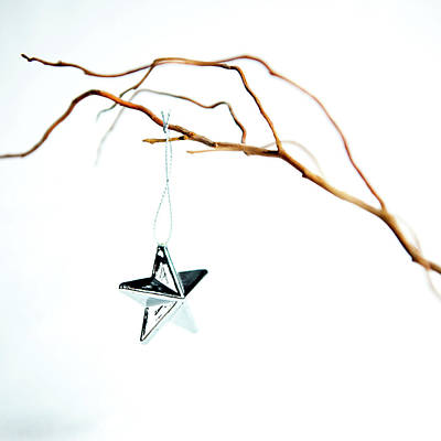 Photograph - Star On A Branch by Helen Northcott