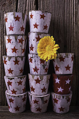 Planter Wall Art - Photograph - Star Planter Cups by Garry Gay