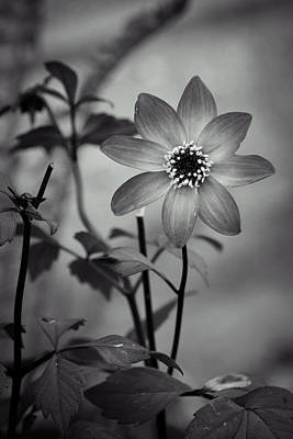 Photograph - Star Power Monochrome by Bill Pevlor