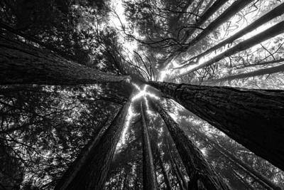 Photograph - Star Shaped Canopy by Marco Oliveira