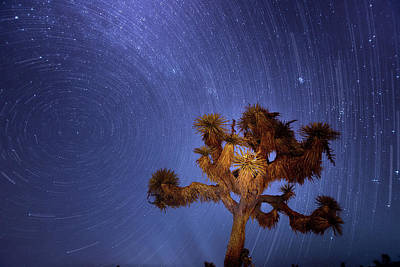 Photograph - Star Trails The Milky Way And A Joshua Tree by Mark Andrew Thomas