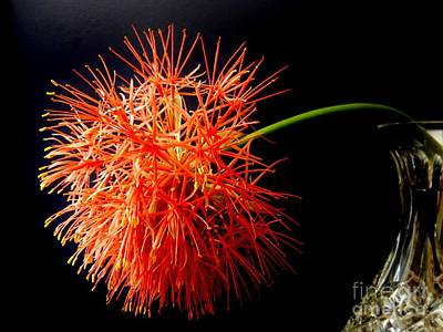 Photograph - Starburst by Amar Sheow