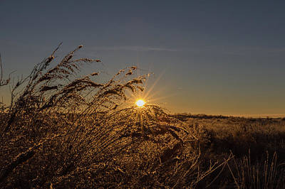 Photograph - Starburst Through The Grass by Tony Hake