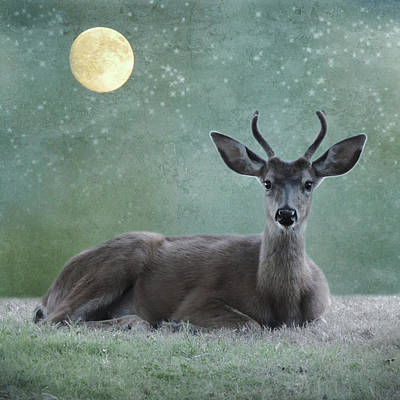 Photograph - Stardust Deer by Sally Banfill