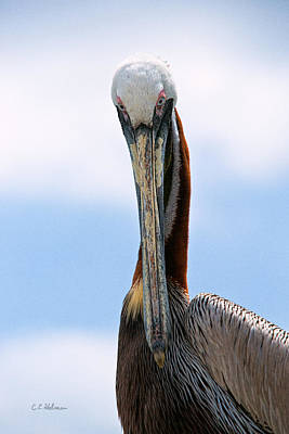 Photograph - Stare Down by Christopher Holmes