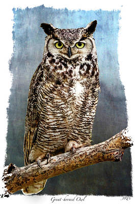 Stare Down Art Print by John Williams