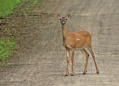 Photograph - Stare Down by Rick Friedle