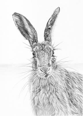 Stare Of The Hare Art Print by Frances Vincent