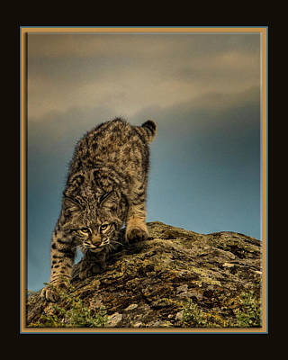 Photograph - Staredown by Roy Nierdieck