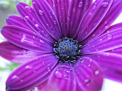 Photograph - Stareye In The Rain by Rosita Larsson