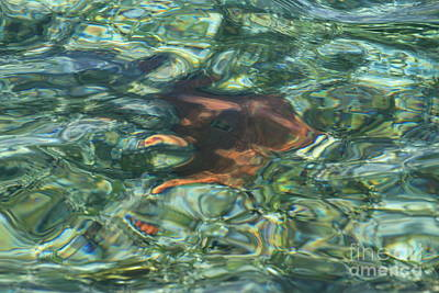 Art Print featuring the photograph Starfish Abstract by Edward R Wisell