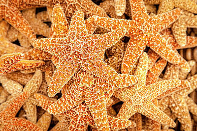 Photograph - Starfish by Alexey Stiop