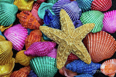 Photograph - Starfish And Colorful Shells by Sharon McConnell