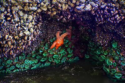 Photograph - Starfish And Company by Adria Trail
