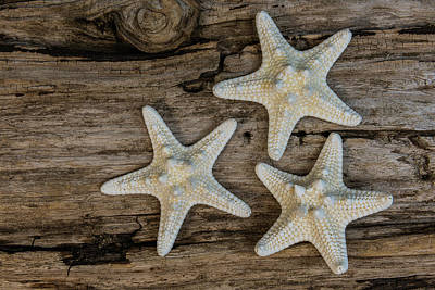 Photograph - Starfish And Driftwood by Randy Walton