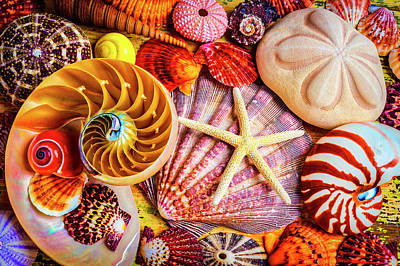 Photograph - Starfish And Nautilus by Garry Gay