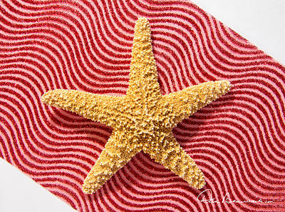 Dan Beauvais Royalty-Free and Rights-Managed Images - Starfish and Ribbon 4144 by Dan Beauvais